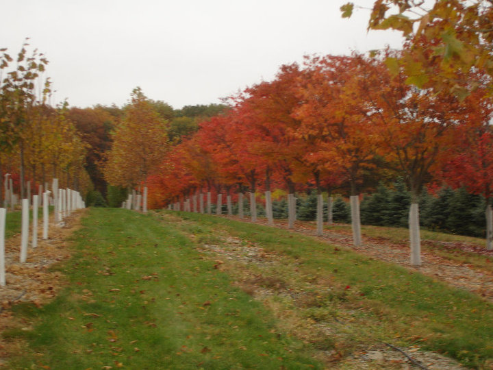 Shrub And Tree Nursery In The Lehigh Valley Pa Benkini Landscaping